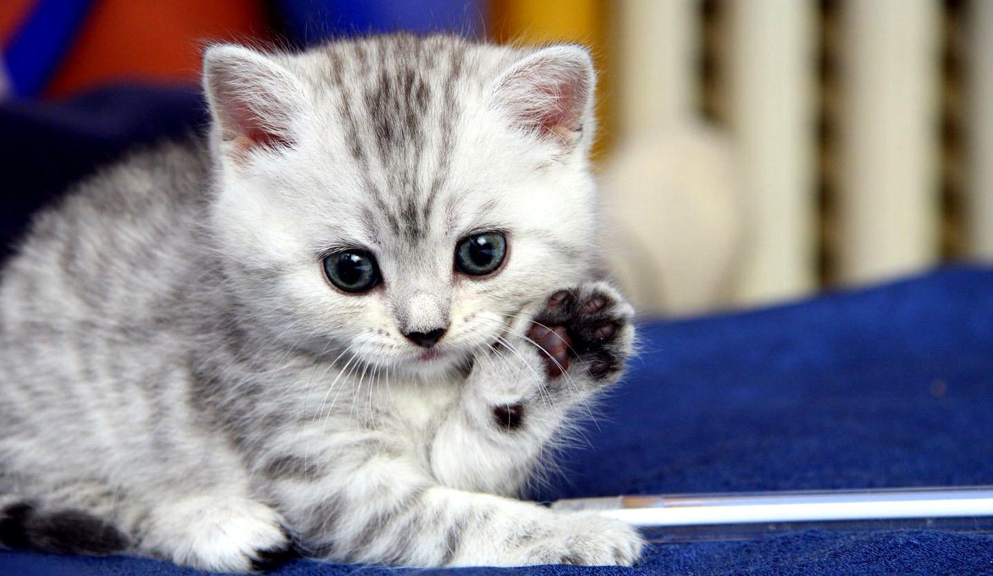 Котами, картинки с котятами фото