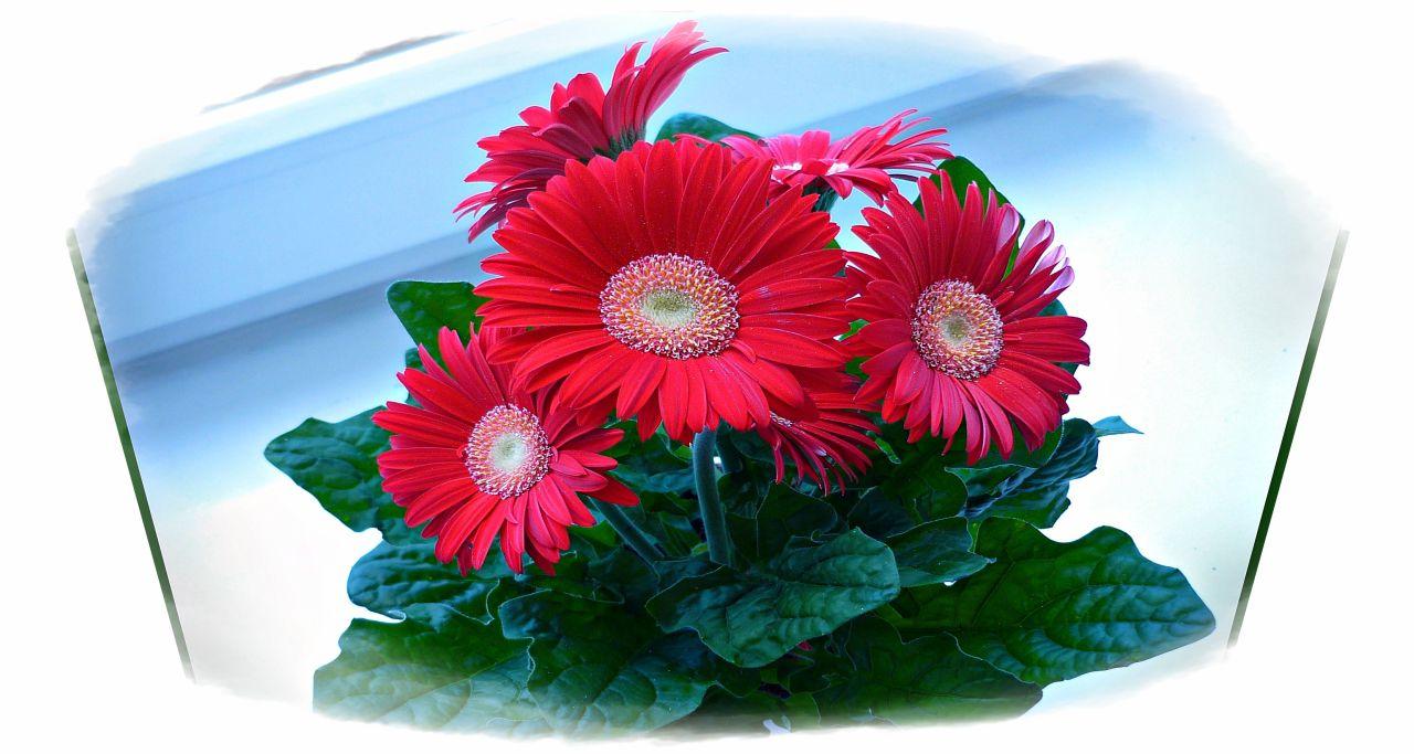интерьер букет цветов флэш открытки также проводятся классные