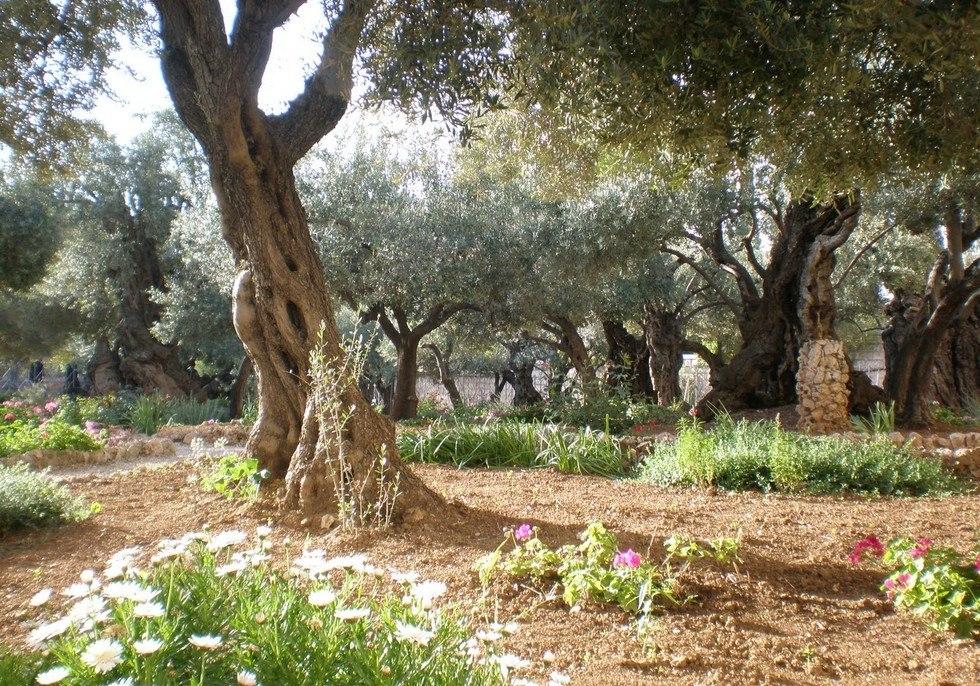 текущую гефсиманский сад иерусалим фото десятков убийств заявил