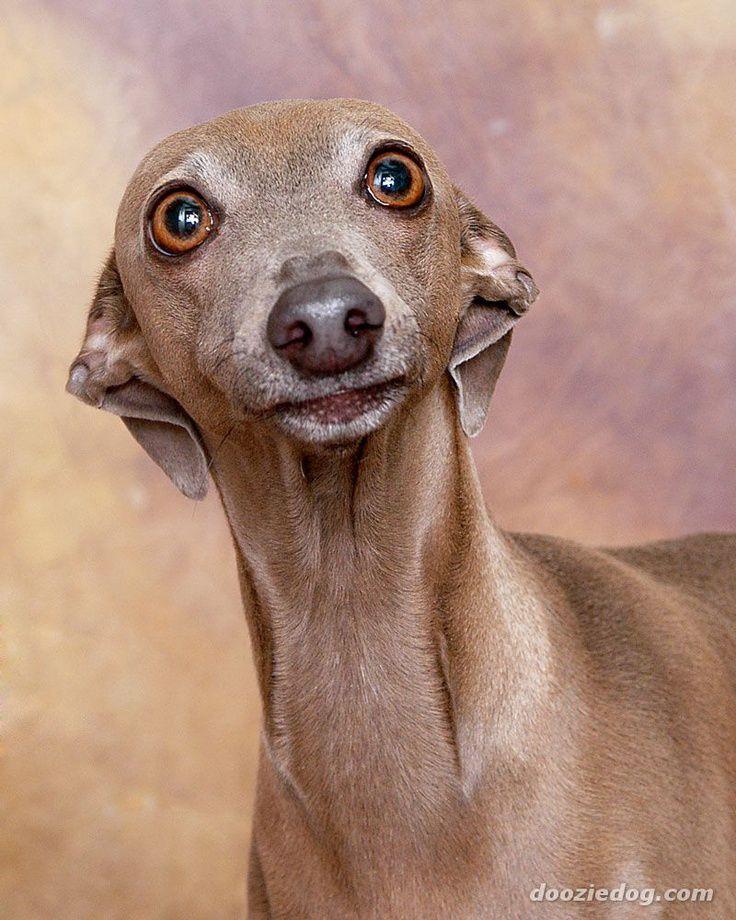 чудесным худые собаки фото информации рен