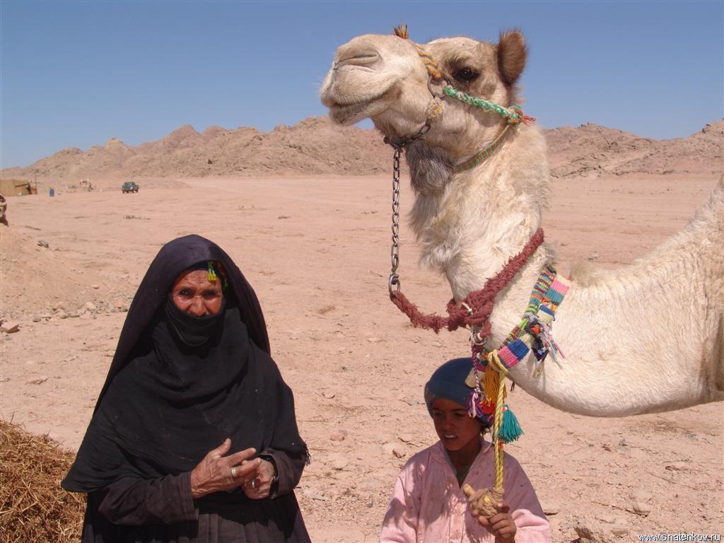 породы фото племени бедуины образец готового