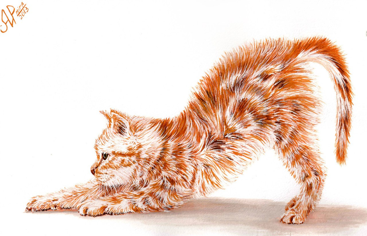 Картинка кошка с выгнутой спиной для детей на прозрачном фоне