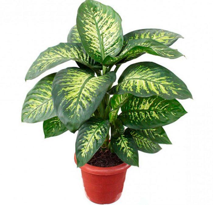 комнатными растениями с картинками будет планетой