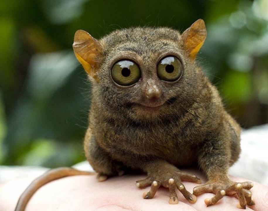 Смешные картинки удивленных животных