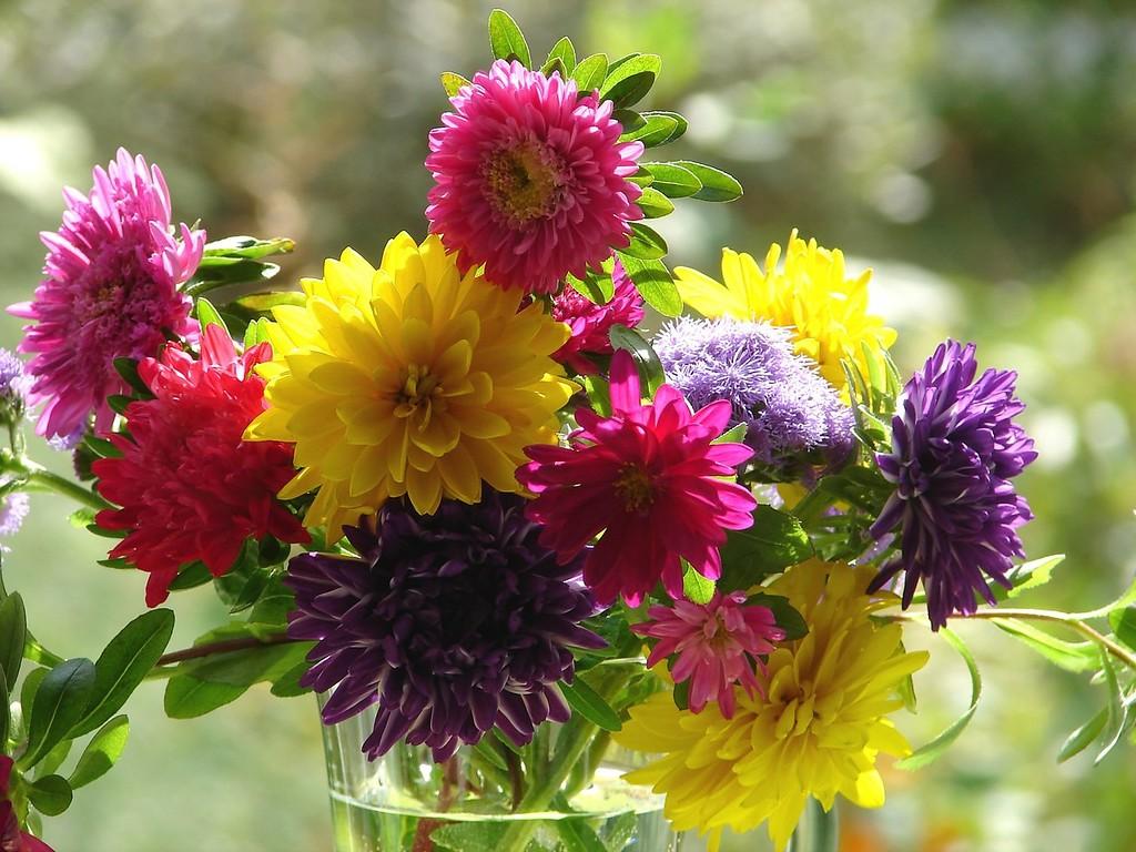 есть картинки на телефон красивые осенние цветы фото