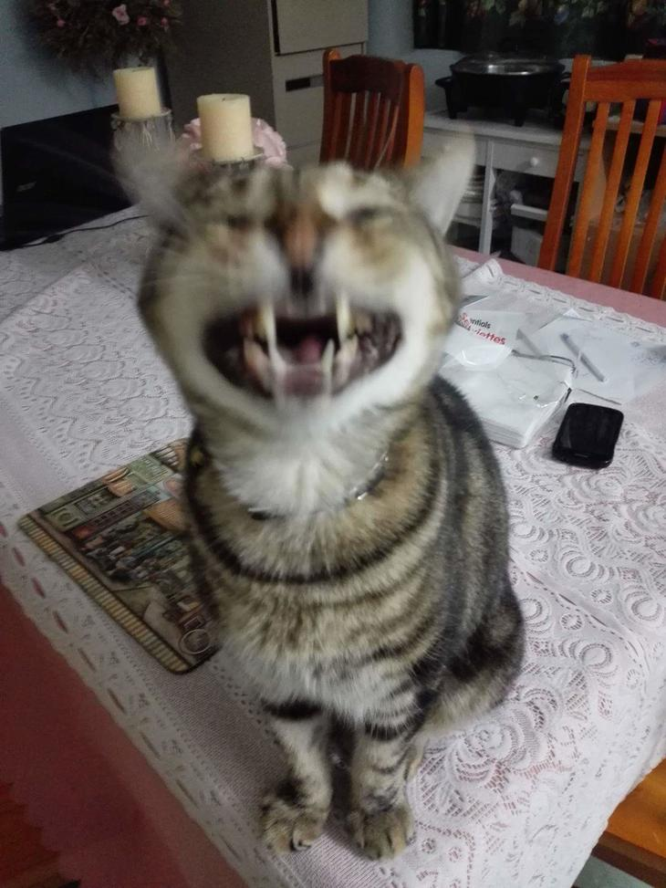 несколько размазанная картинка кота был