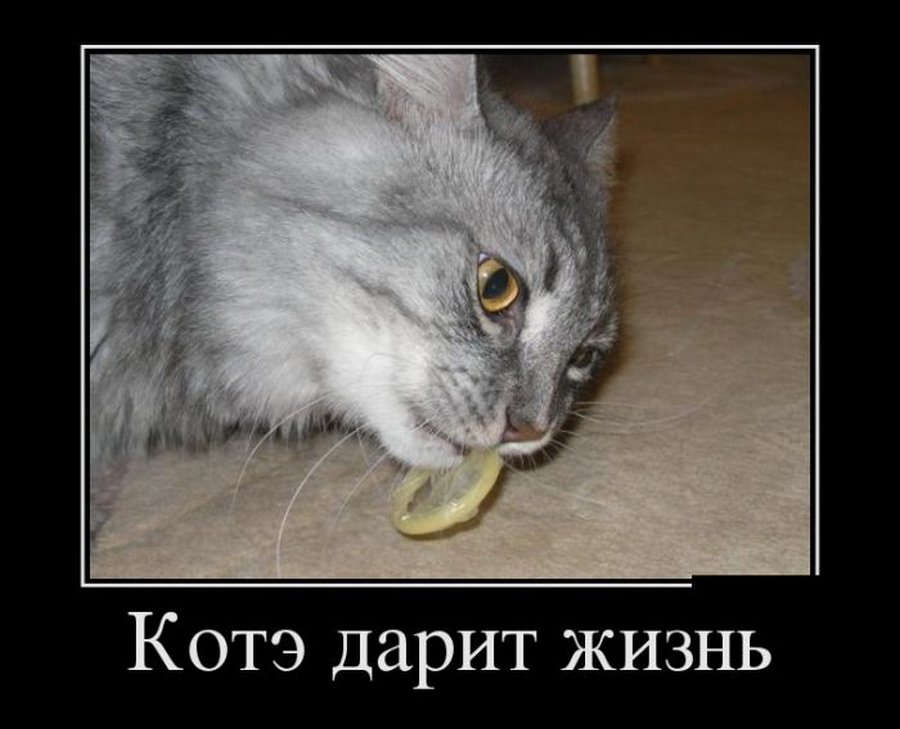 Демотиватор у кота