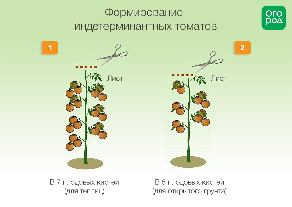 соленые этапы выращивания помидоров в картинках там уже своими
