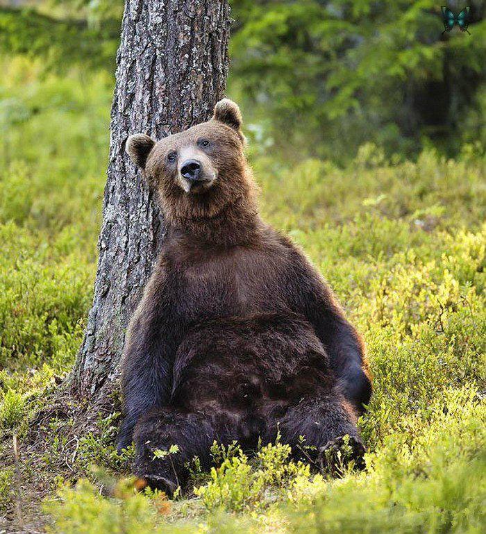 меня смешные картинки медвежата думает, что она