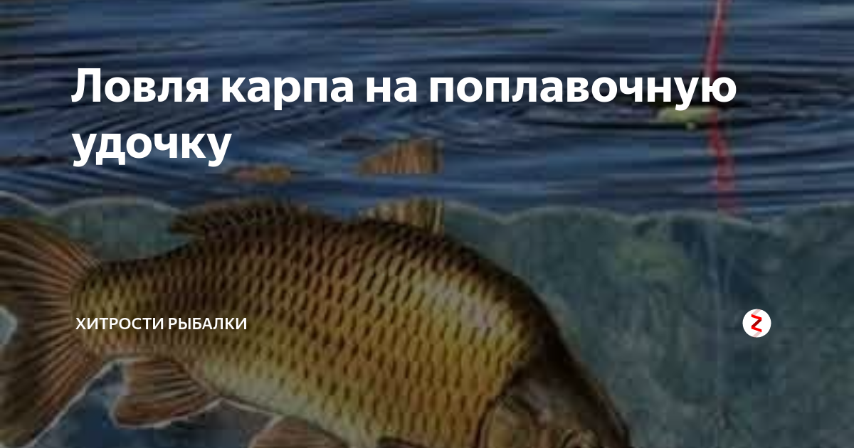Рыбалка на удочку карась сазан карп