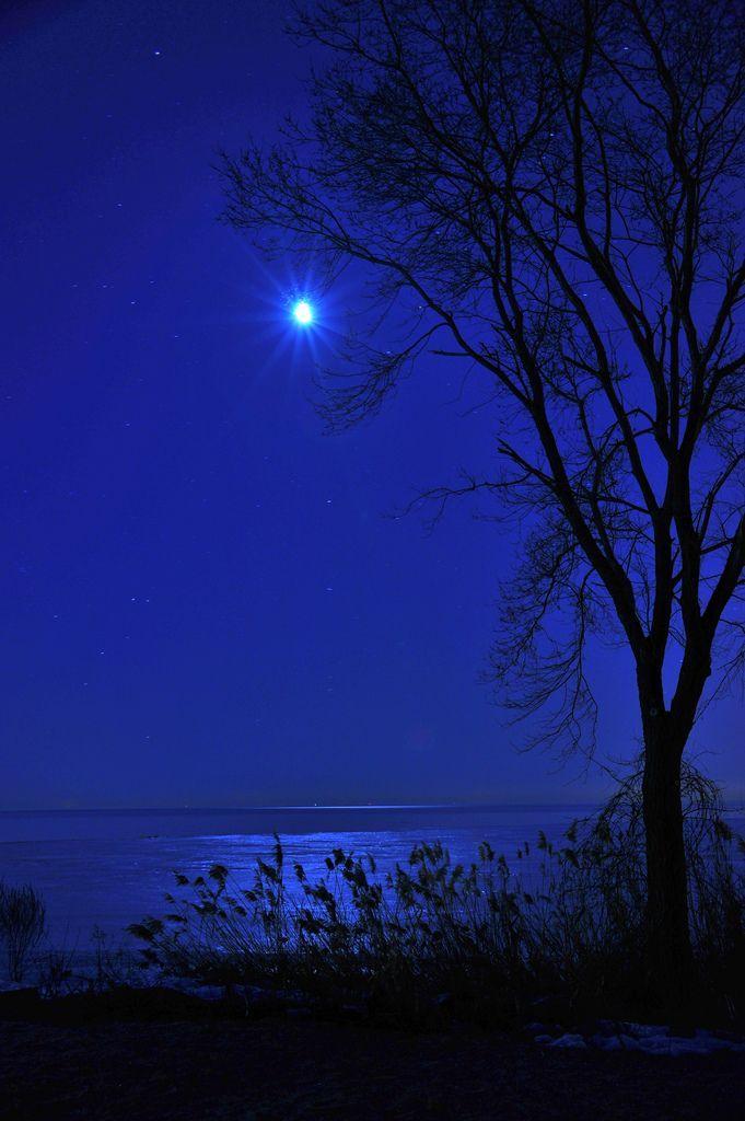 оттенок ночи картинки животного напоминало сиамских