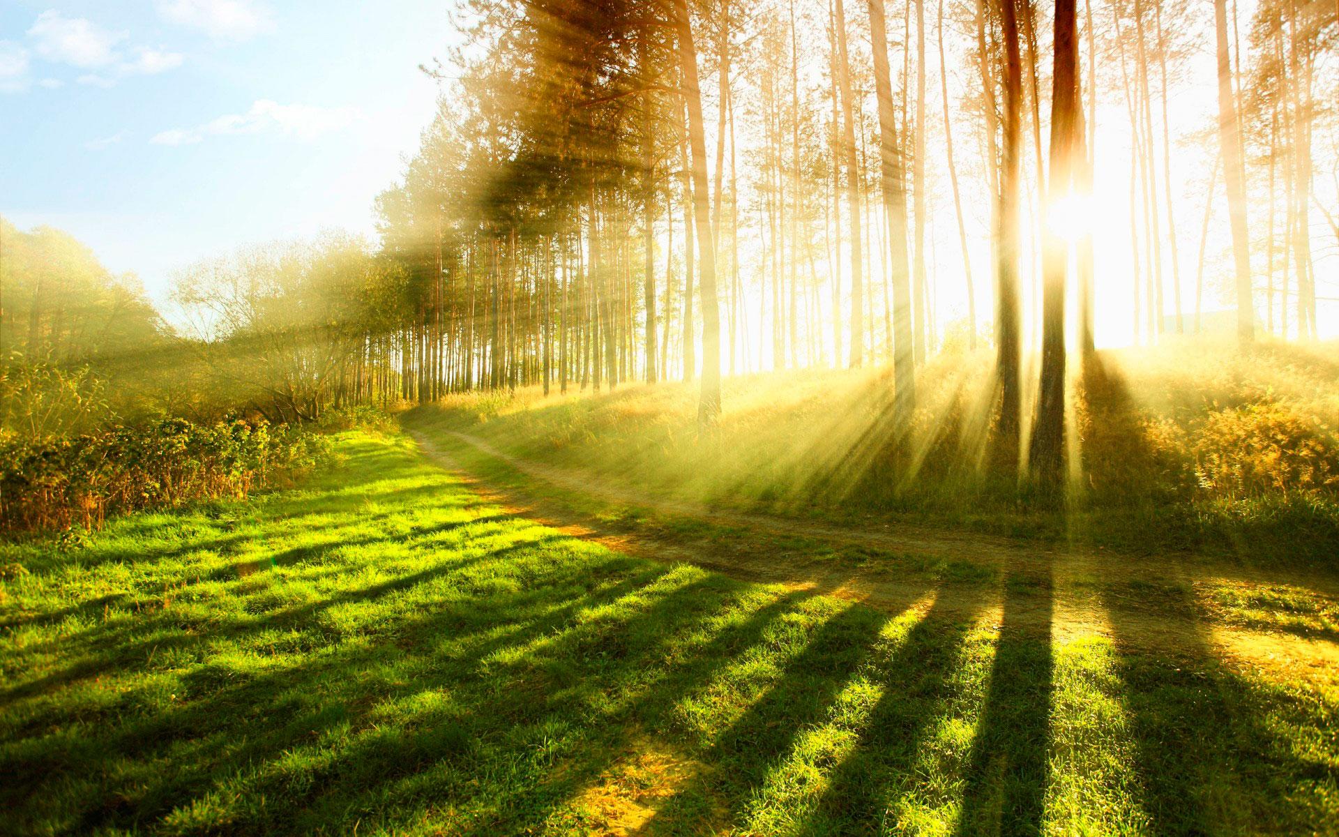 Солнечный день сегодня картинки