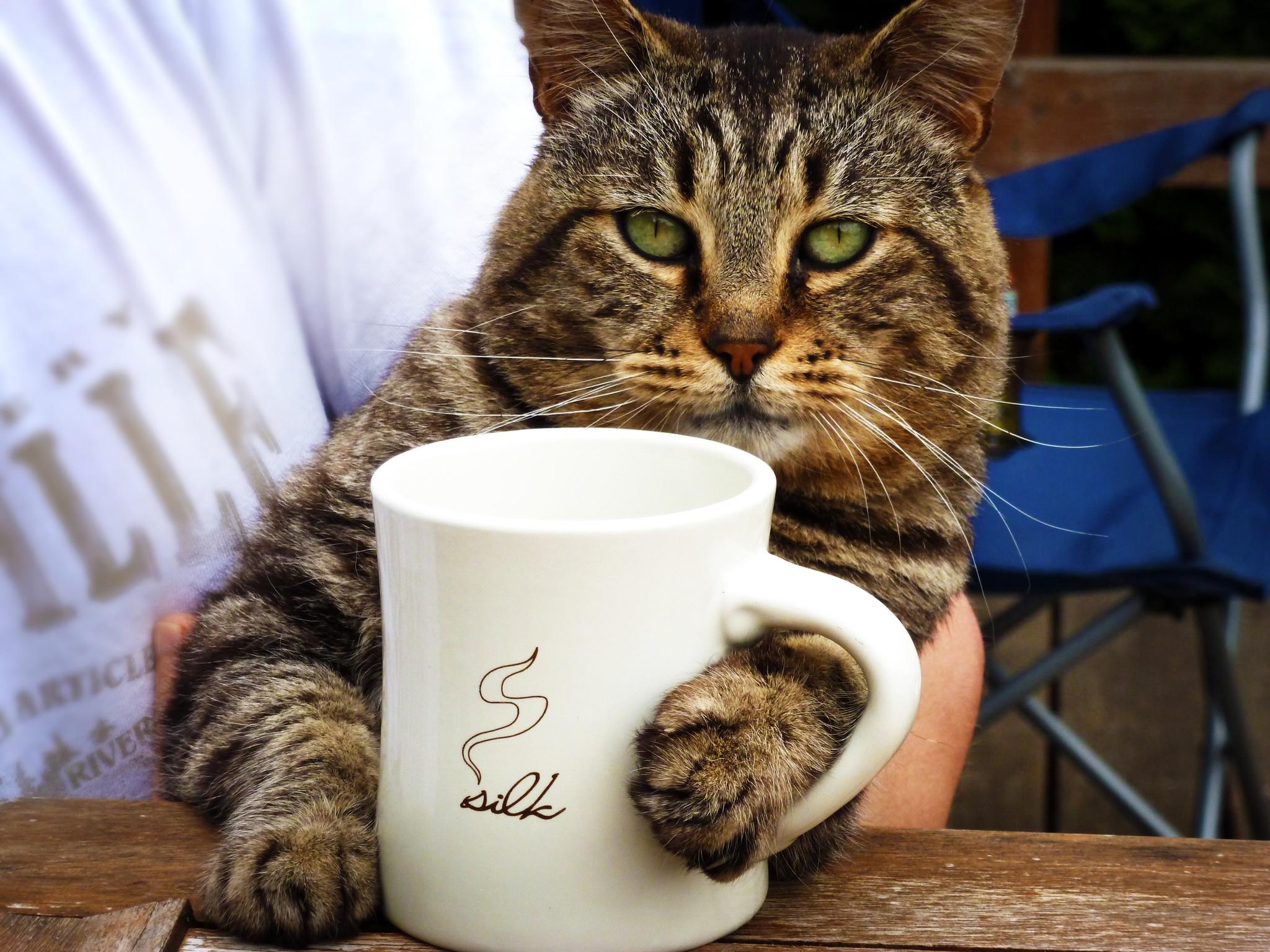Доброе утро картинки коты и кошки