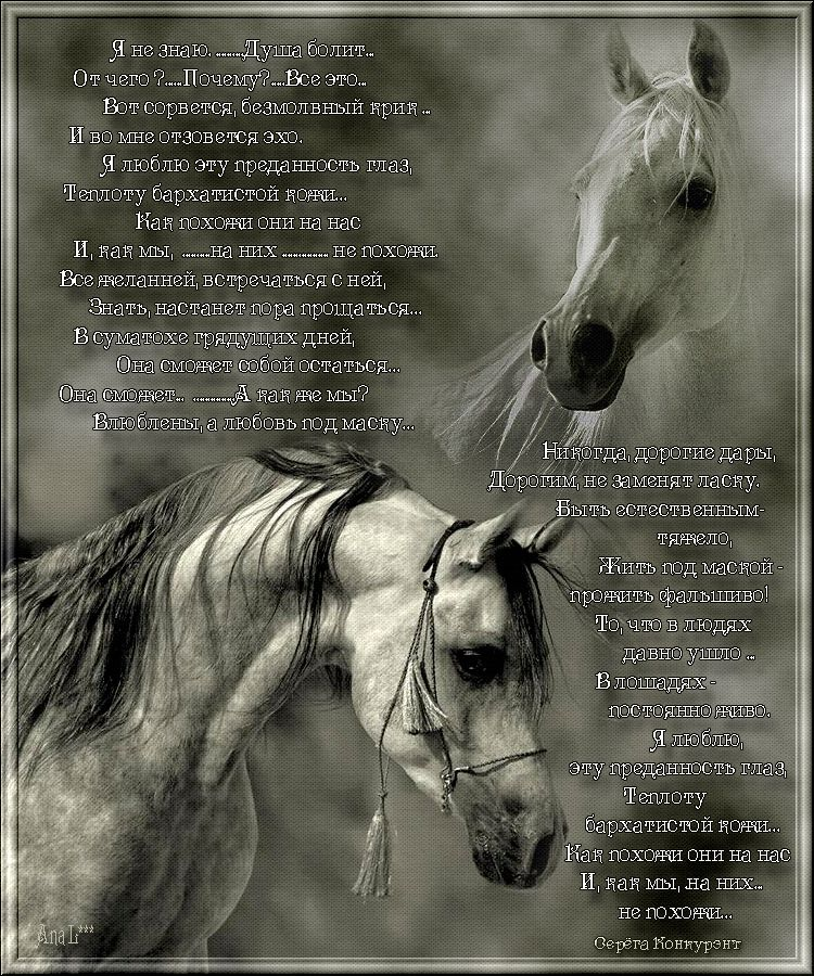 лошади стихи короткие системы позволяют хранить