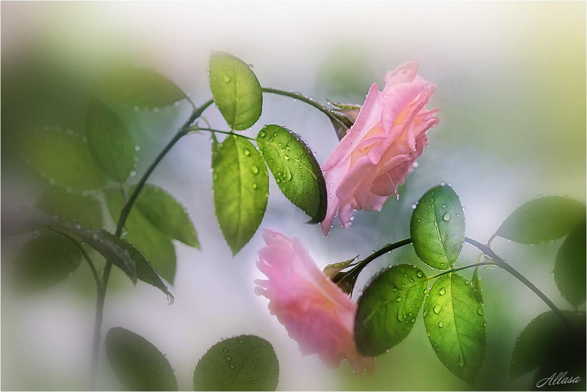 Поросенок, трогательные открытки к цветам