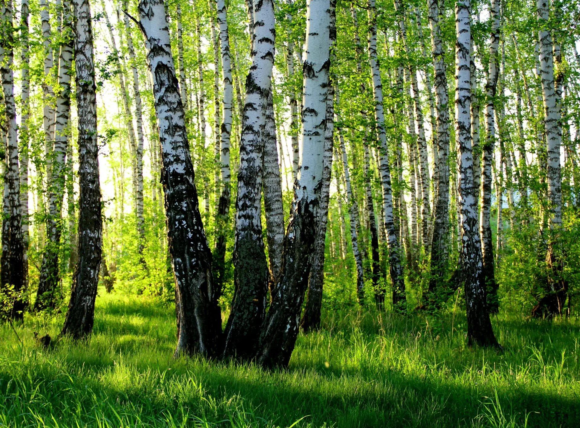 фото природа россии высокого качества точно волшебный