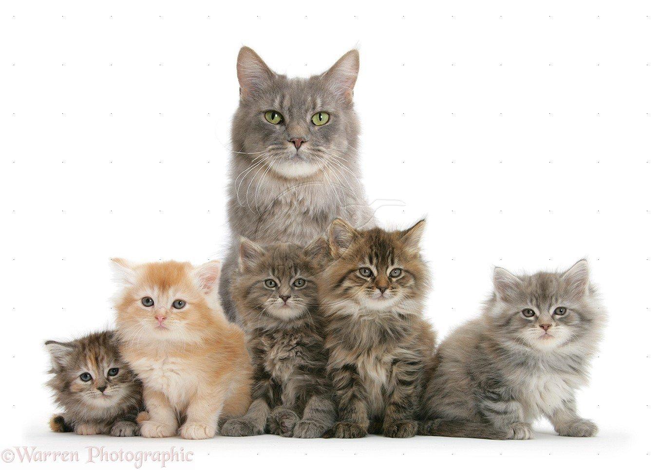 Картинка кошка с котятами для детей на прозрачном фоне