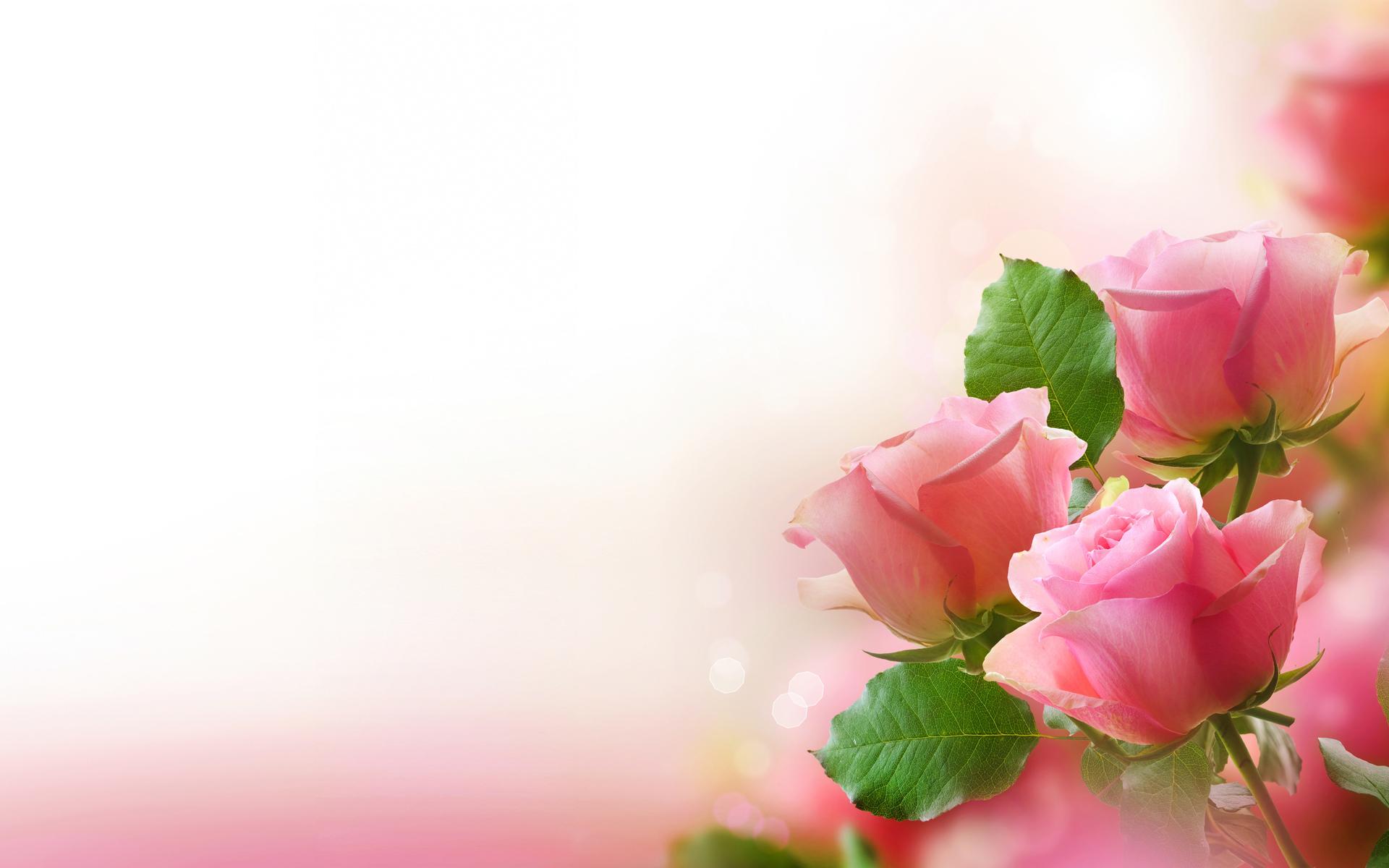 Фоны на открытки с цветами
