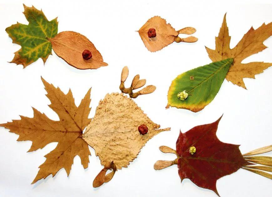 Картинки из гербария для детей