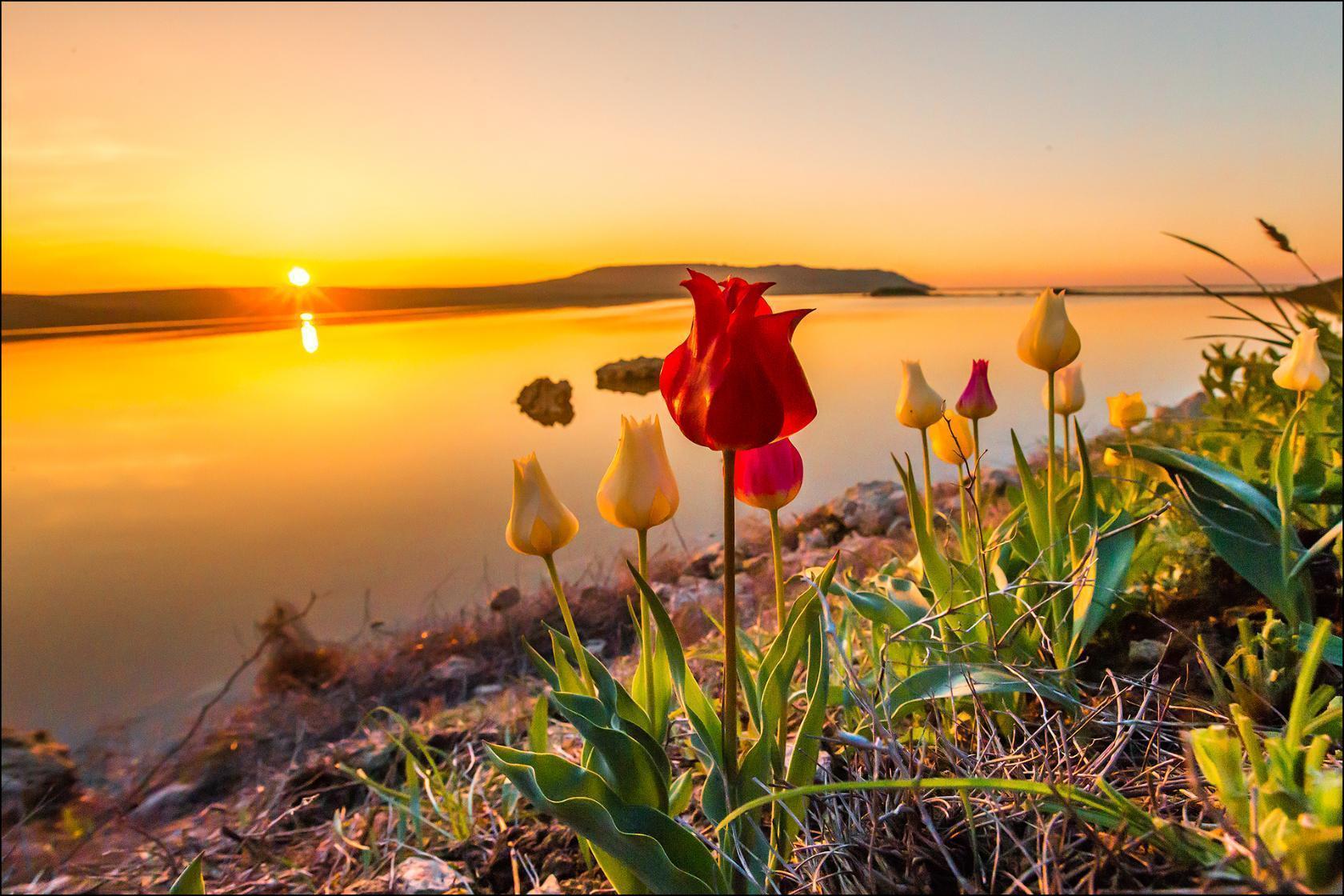Открытки весна рассвет