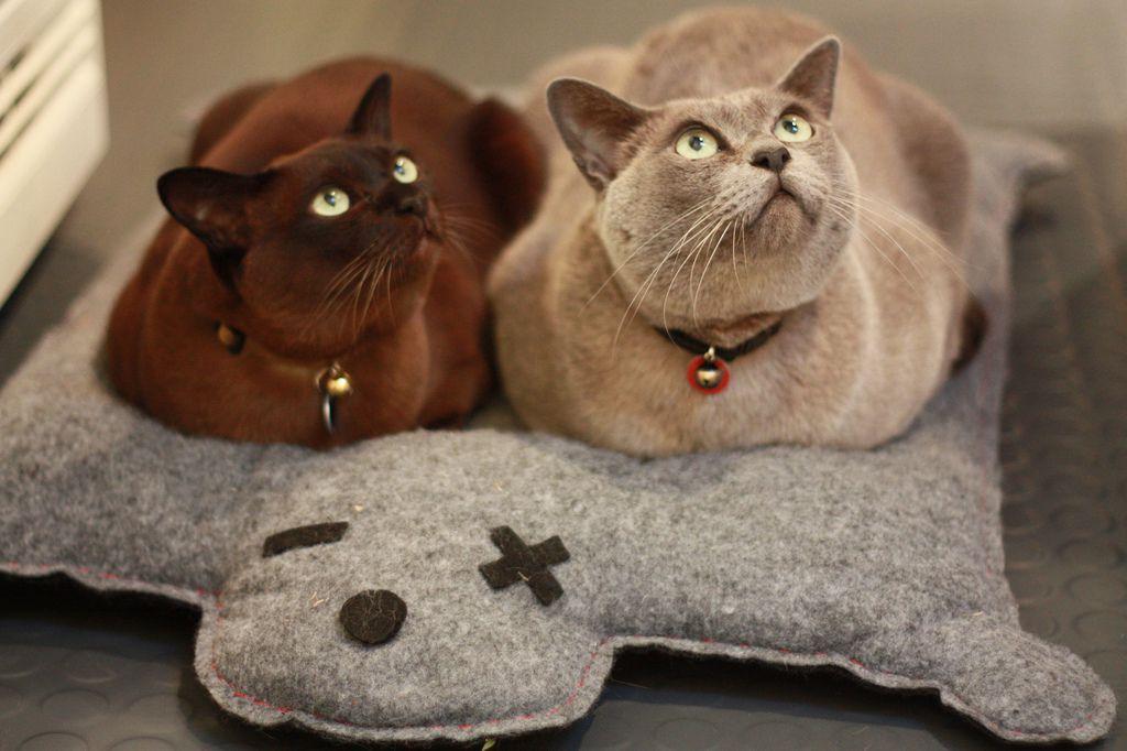 международный день кошек 8 августа картинки прикольные для поднятия настроения стакан горячего горячительного