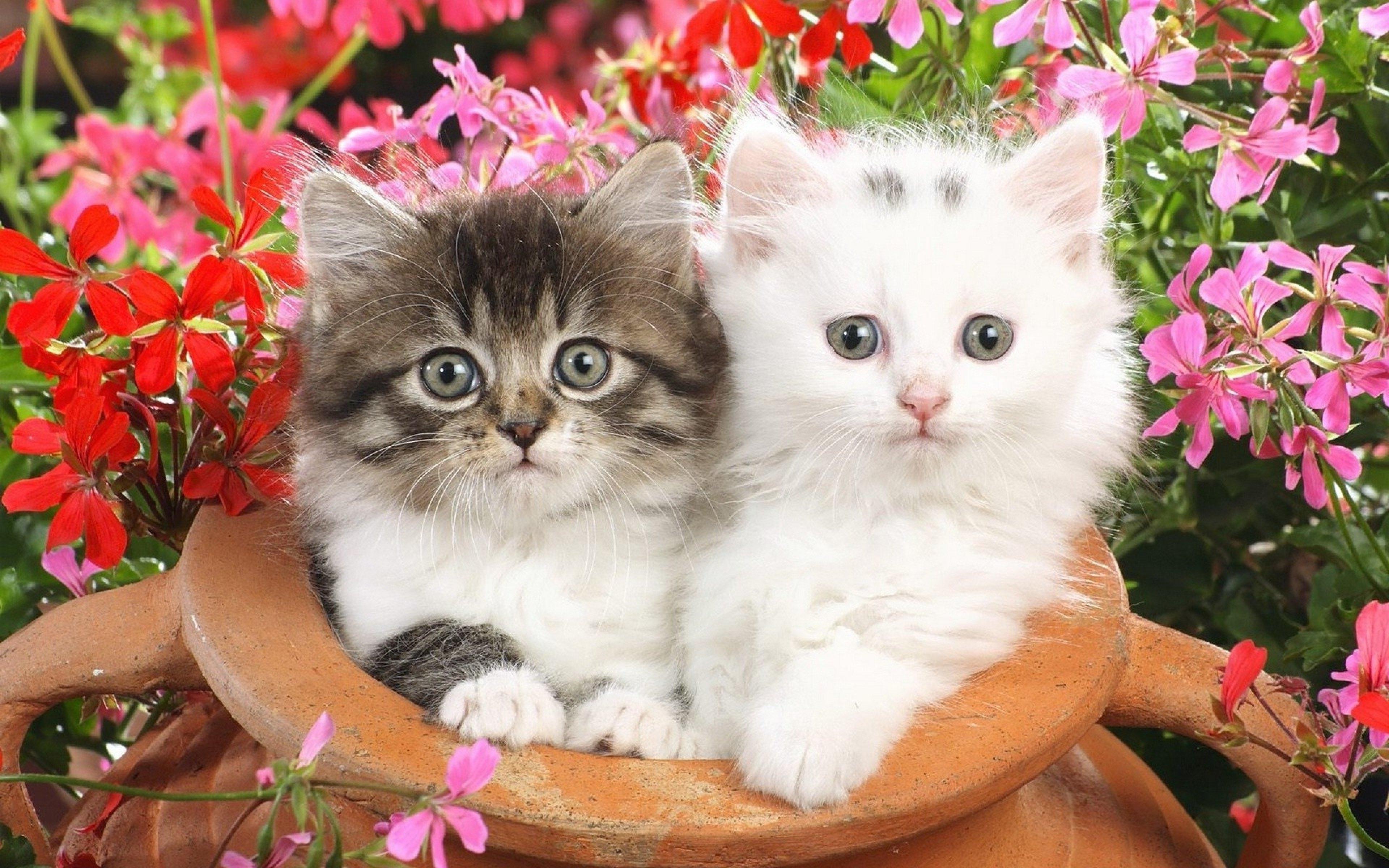 Картинки про котят красивых