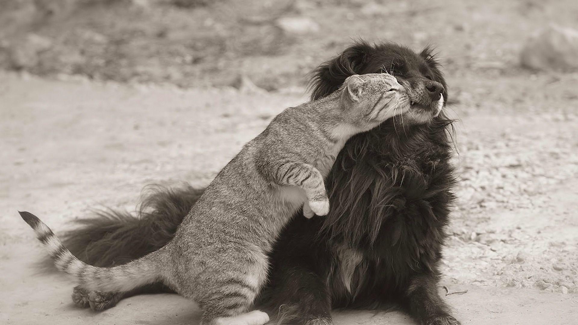 Поздравление, картинка с приколом про любовь