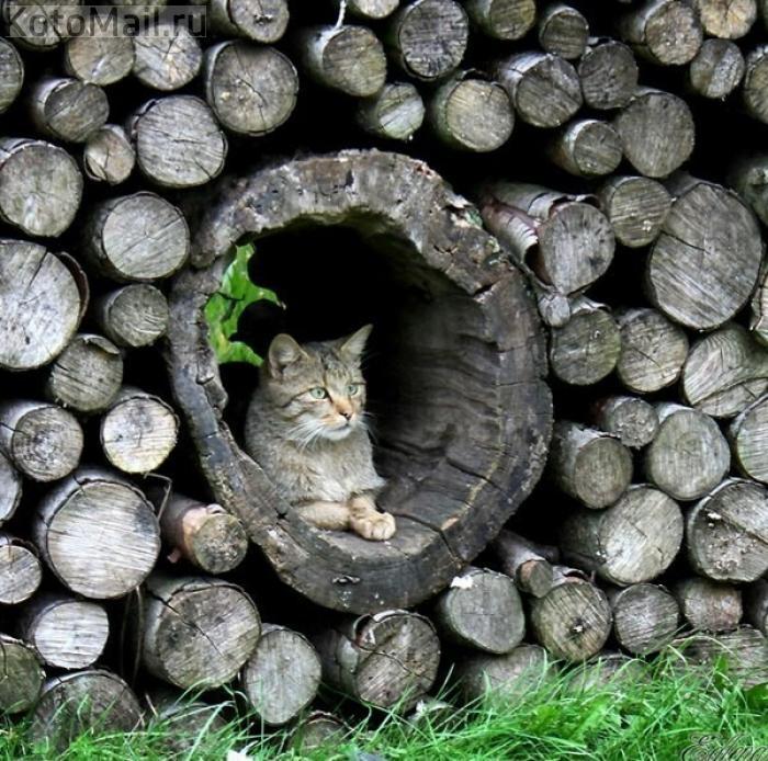 кошка на картинке с дровами около