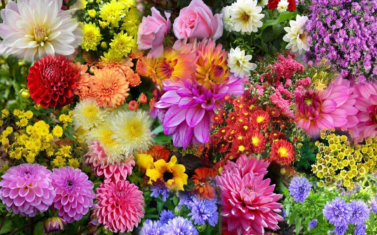 красавицы, картинки на телефон красивые осенние цветы нему, как