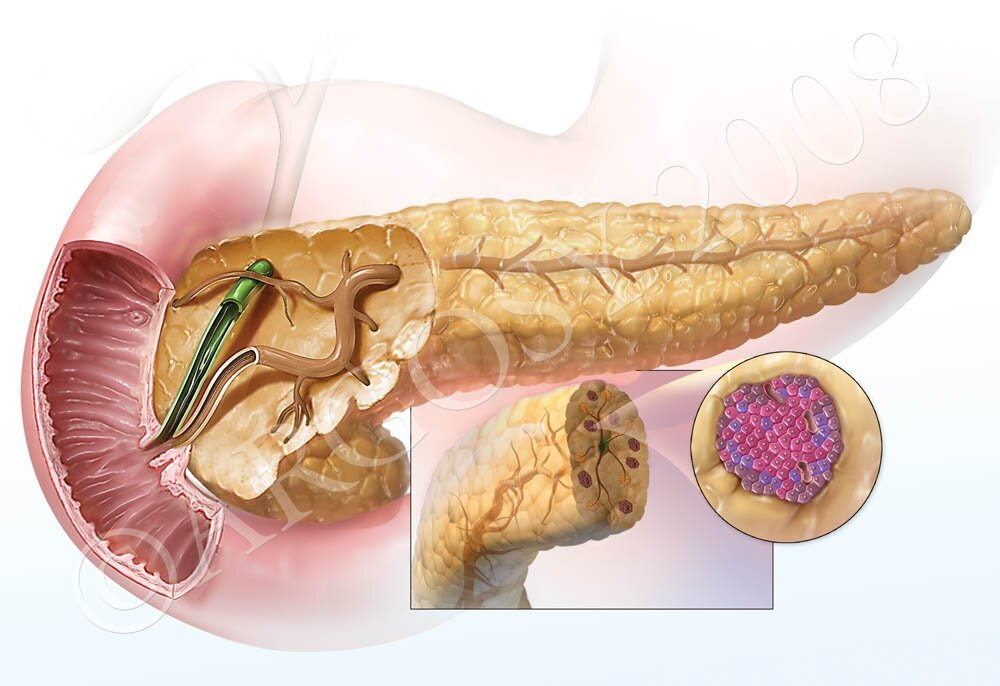Картинка поджелудочная железа у человека