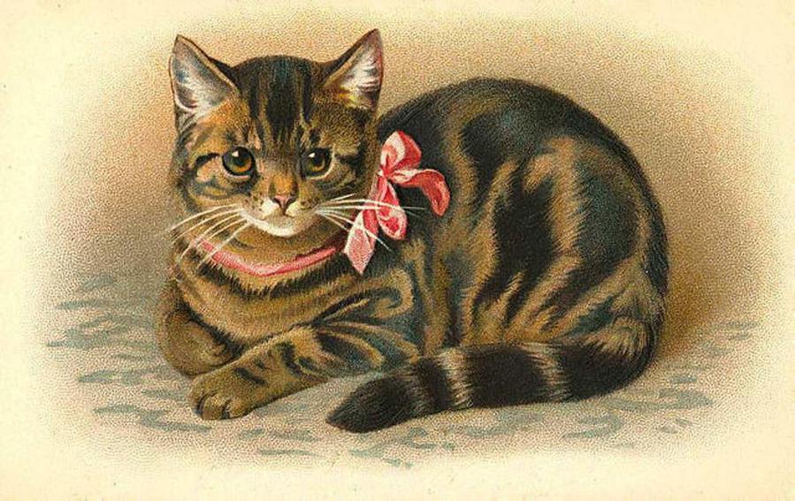 Картинки с кошками девон рекс всех