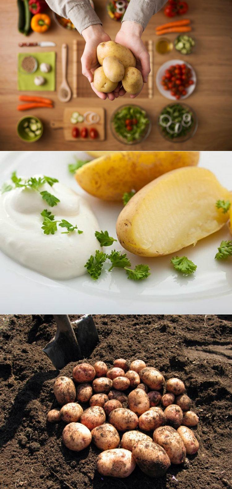 Мясная Картофельная Диета. Картофельная диета