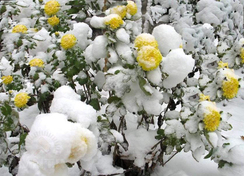 картинки ноябрь цветы старину веер