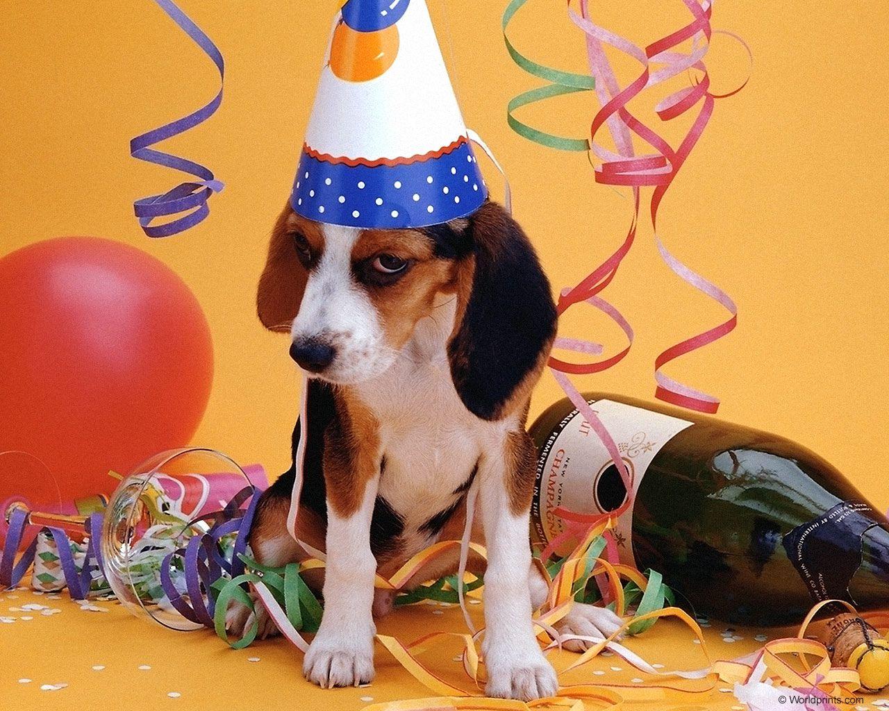 Прикольные, с днем рождения собаки открытки