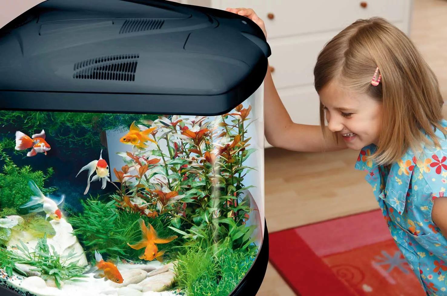 картинка кормить рыбок в аквариуме