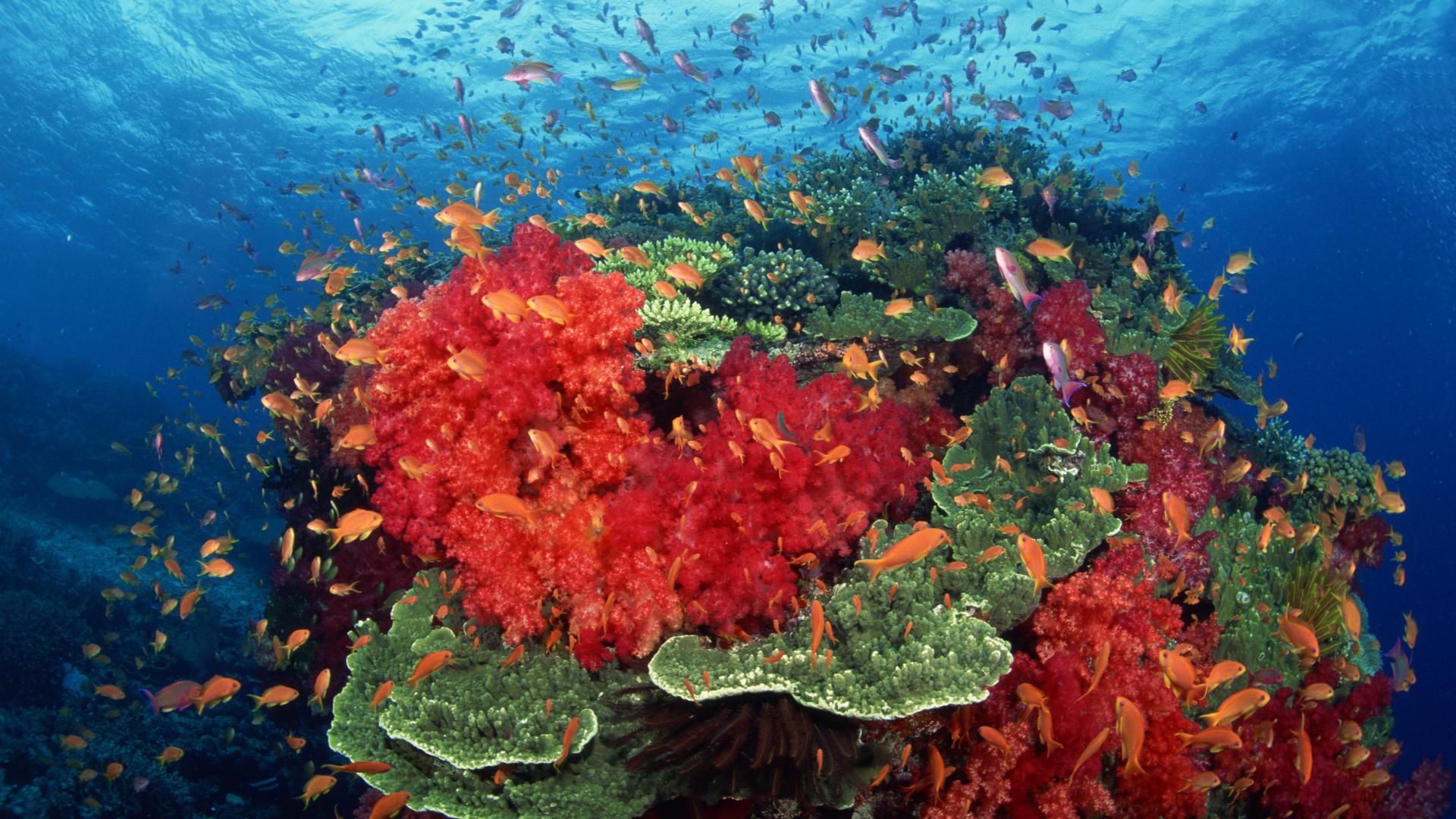 бесплатных объявлений растения атлантического океана фото и названия как сугубо мужскую