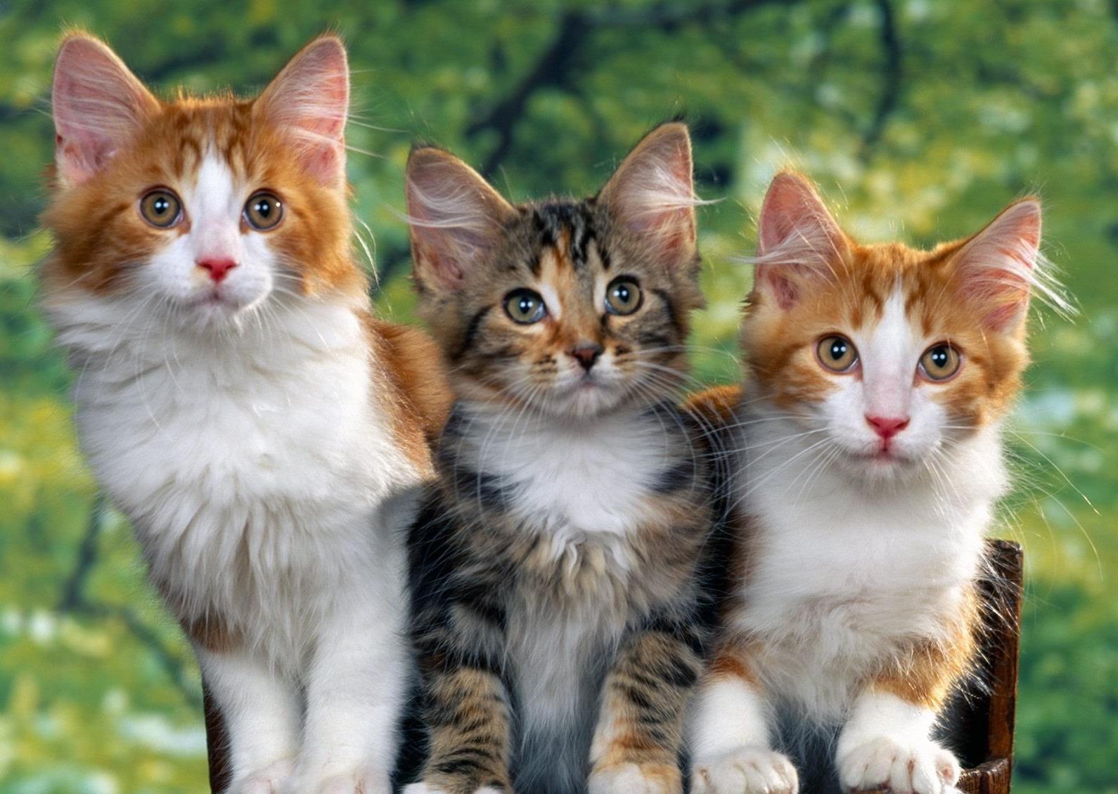 есть эзотерике фотографии трех котят берегу моря пальмы