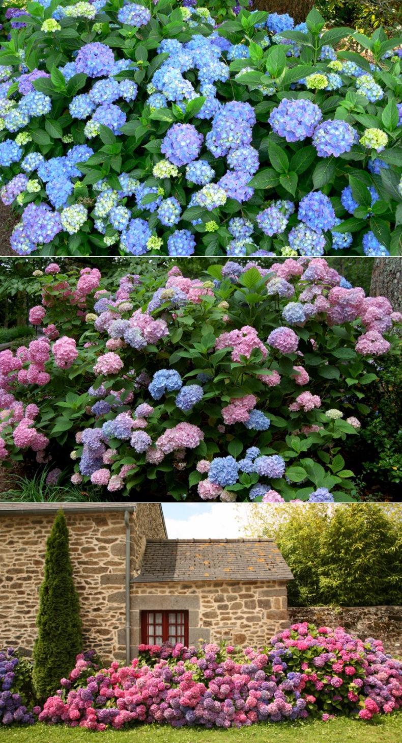Народные заговоры при посадке цветов