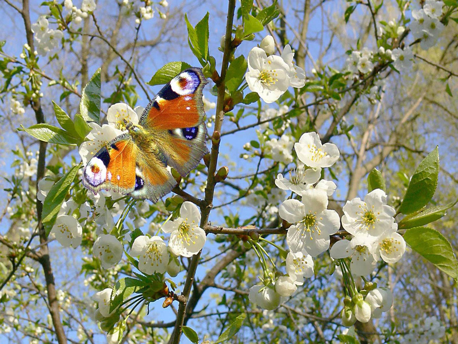 зеленую фото на тему весна природа займы онлайн карту