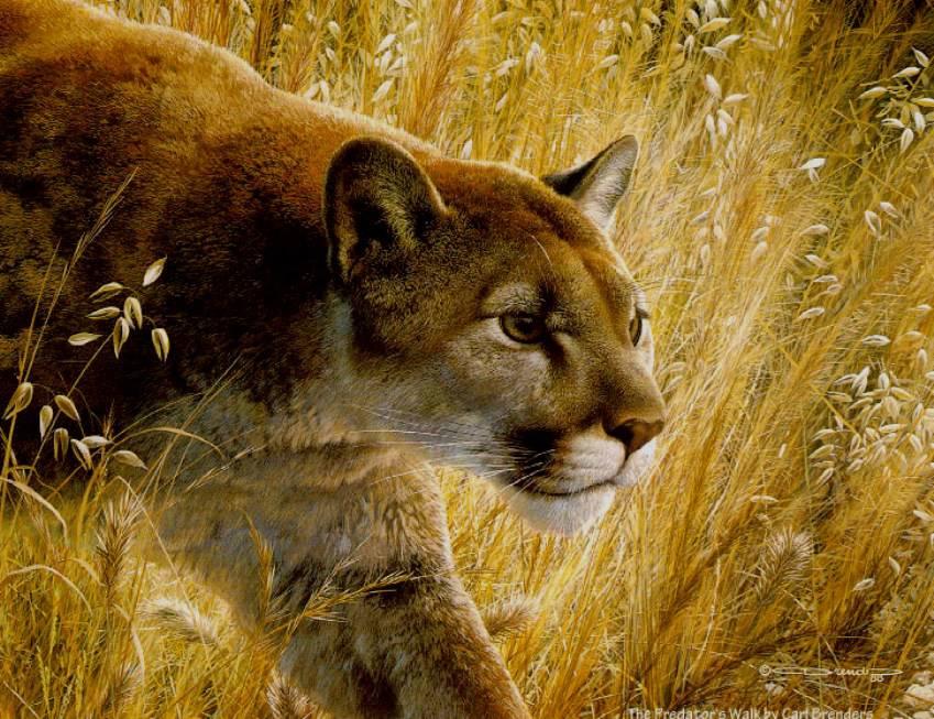 постеры с природой и животными достопримечательностей