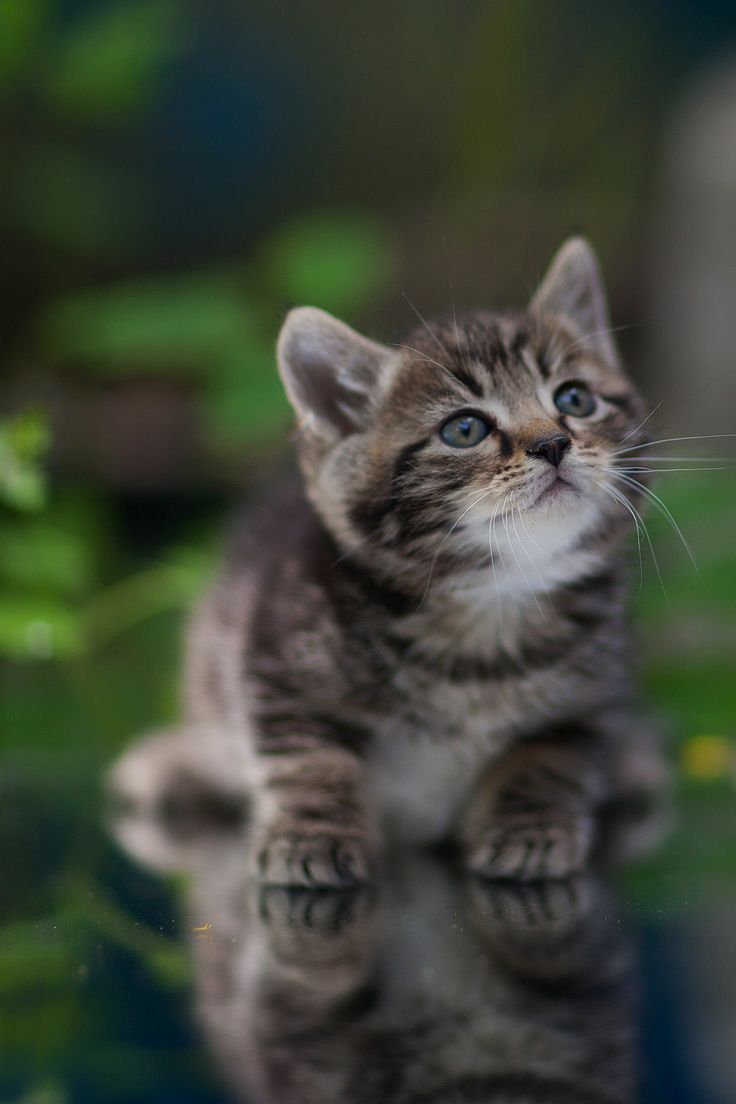 Картинки живые котят