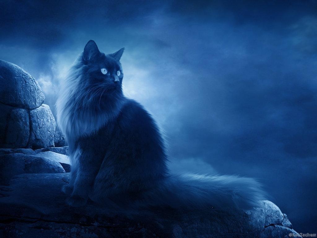 для человеку стали нравиться коты мистика ли это туристическая быстрораскладывающаяся