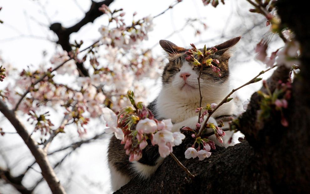 Весне дорогу картинки с животными