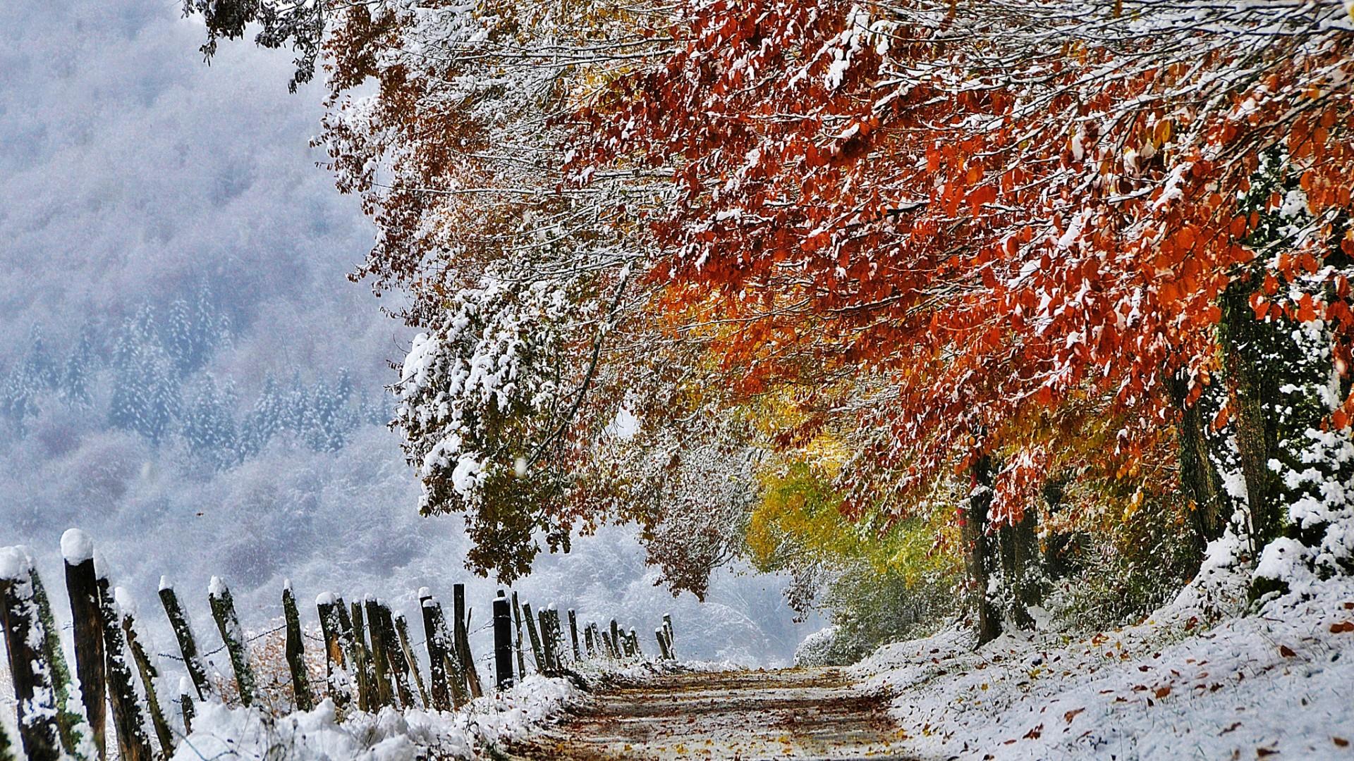Картинки ранней зимы на телефон