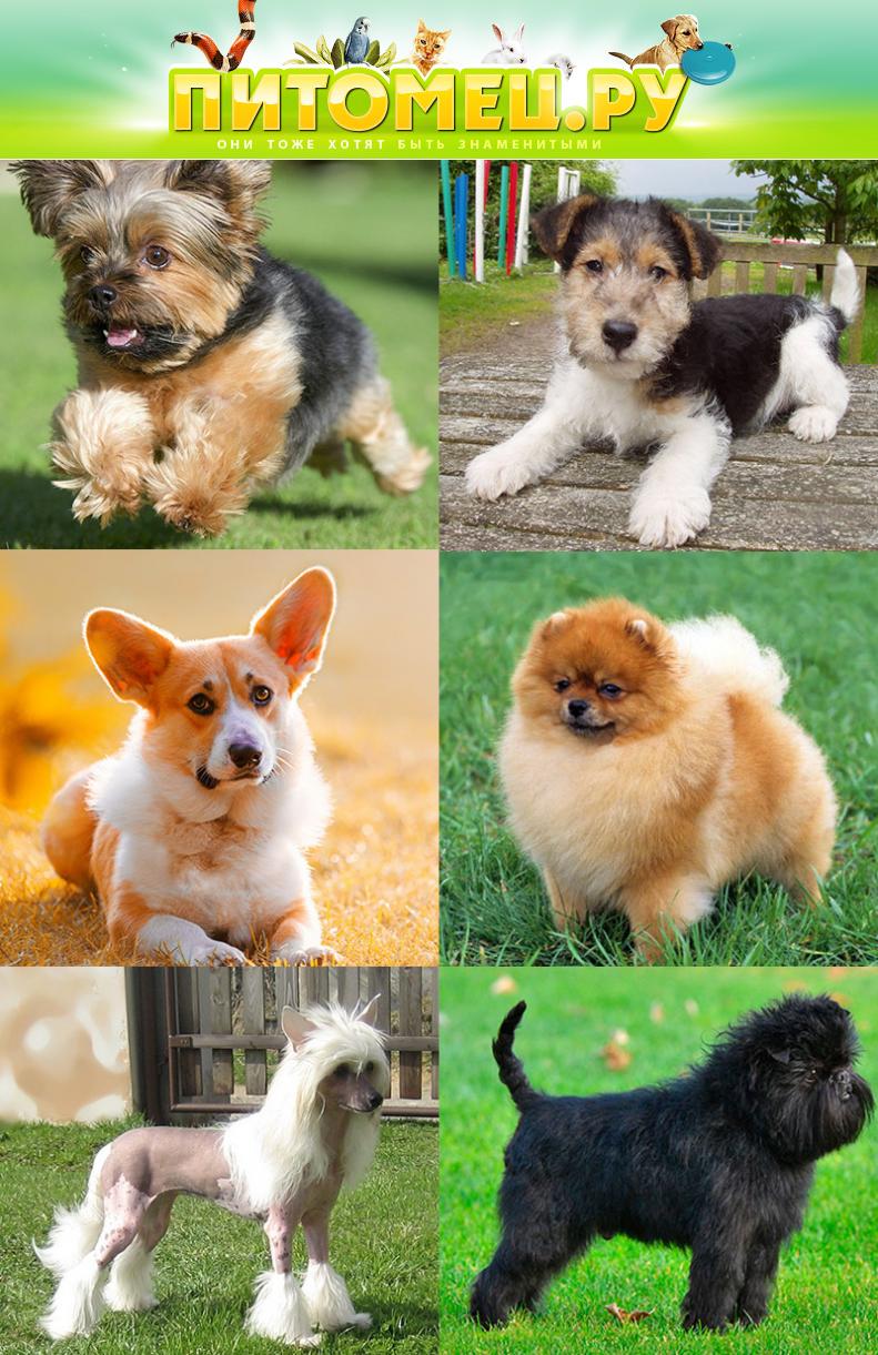 Картинки собак с названиями