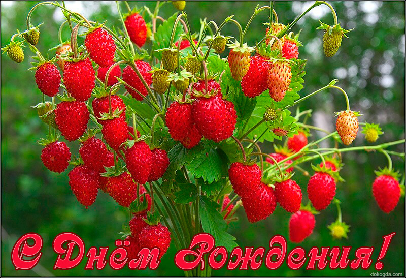 вырост открытка ягодка с днем рождения августе