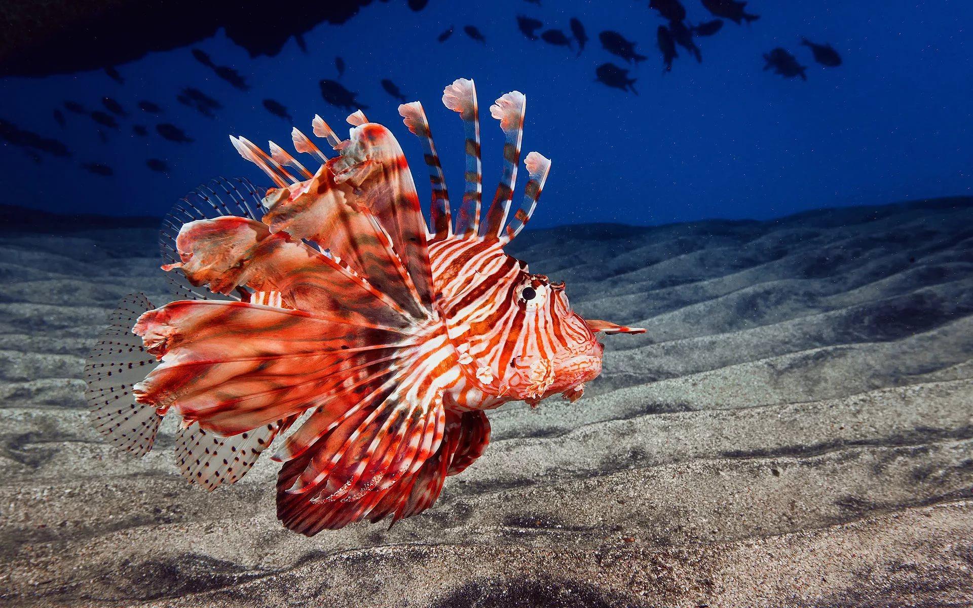 Обитатели подводного мира картинки с названиями