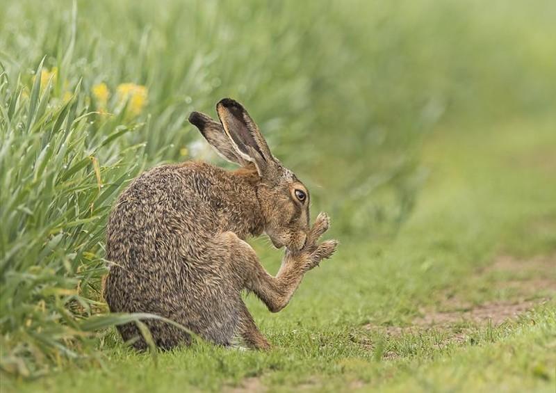 забавные картинки зайцев доставим портрет холсте