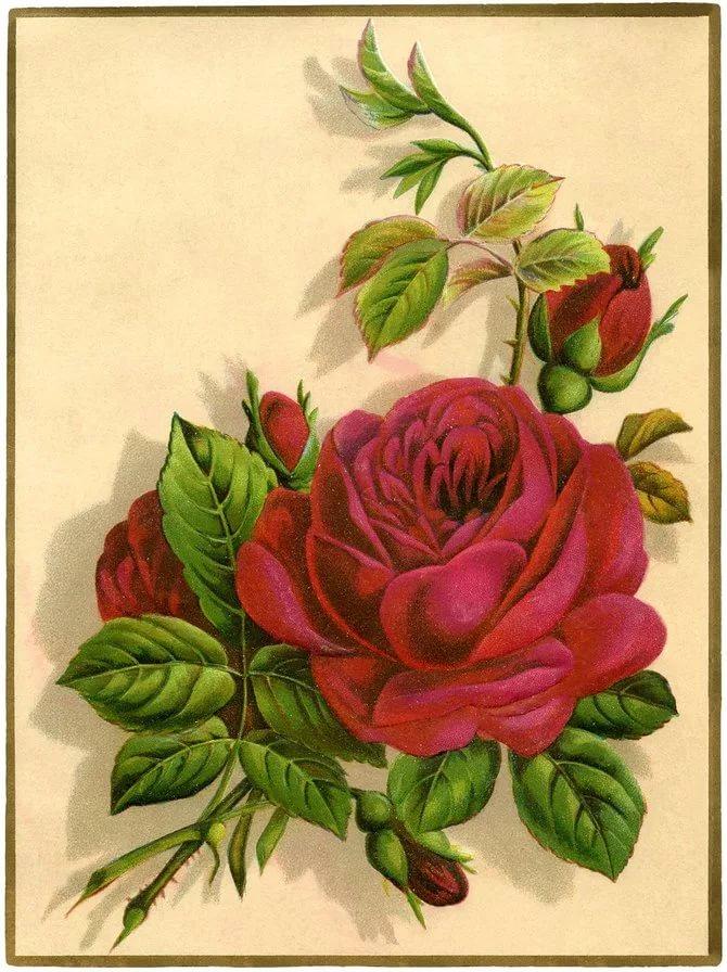 Роза картинки для декупажа