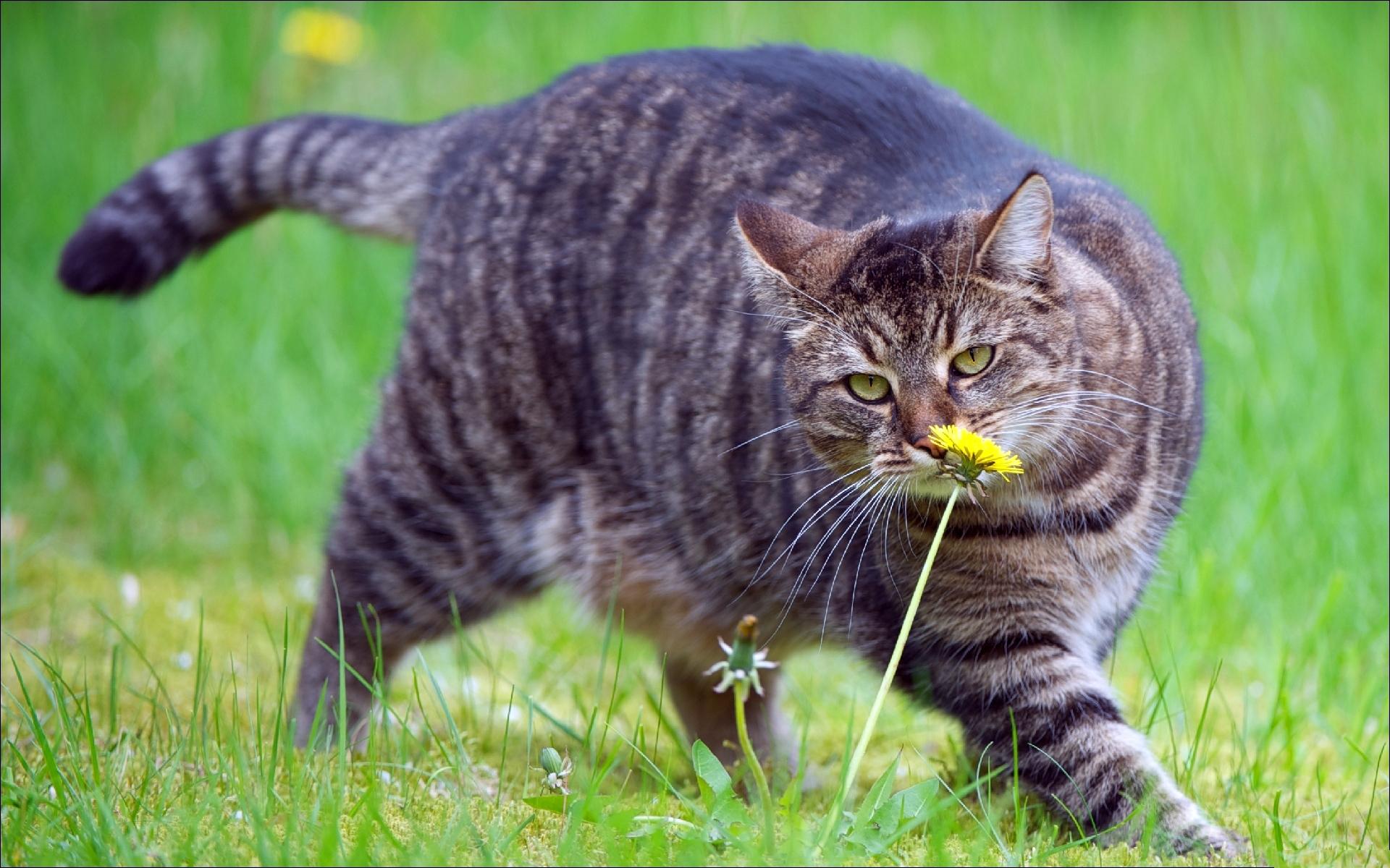 фото выпендрежной кошки сердцем любя, счастья